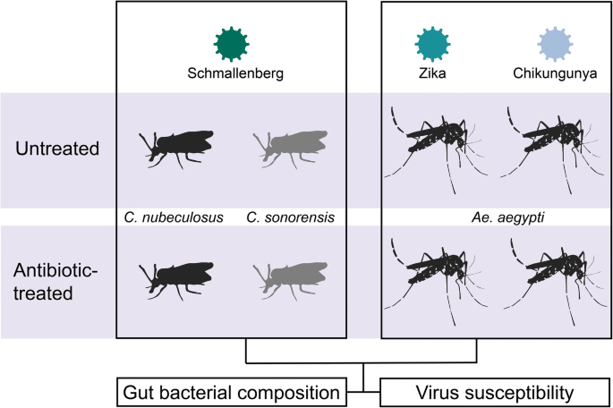 Impact of Gut Bacteria on the Infection and Transmission of ...