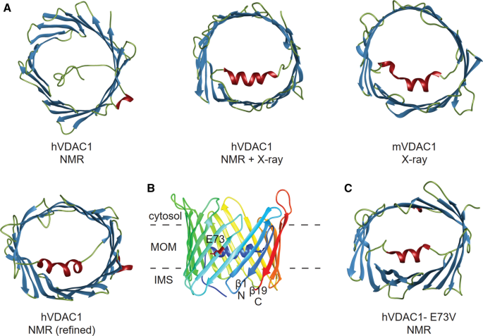 Structure, gating and interactions of the voltage-dependent anion ...