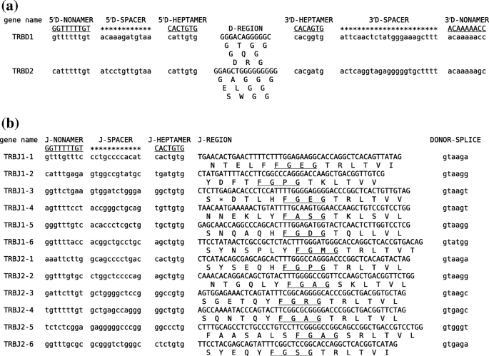 Characterization of the ferret TRB locus guided by V, D, J, and C ...