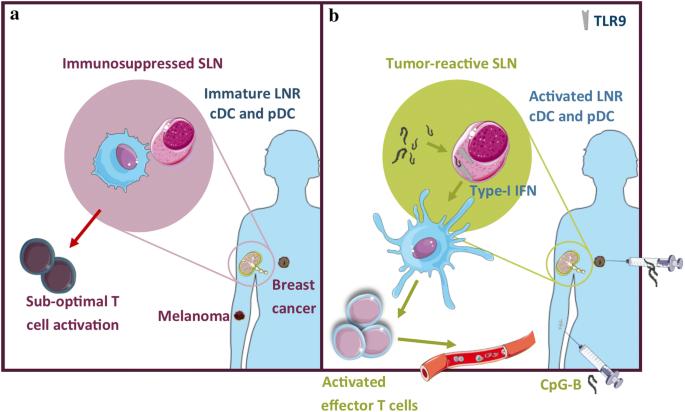 Unlocking the therapeutic potential of primary tumor-draining ...