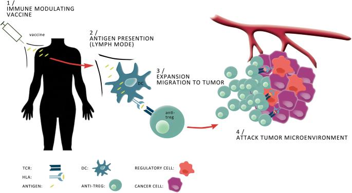 The T-win technology: immune-modulating vaccines   SpringerLink