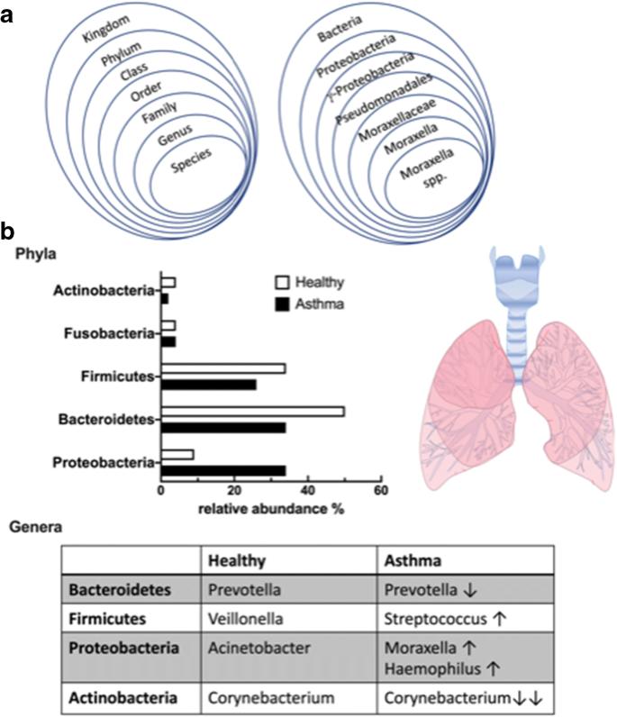 Giardia hasmenes, Ce apar viermii, cum să le trateze - Papilloma bulasma yollar
