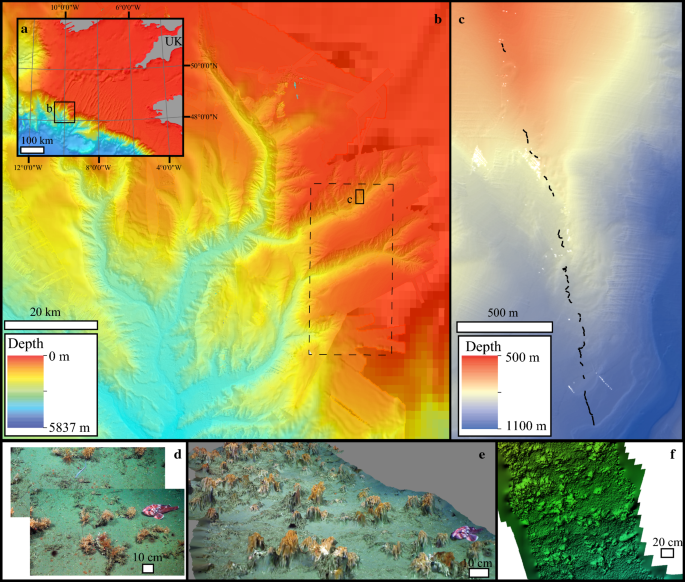 Using 3D photogrammetry from ROV video to quantify cold-water ...