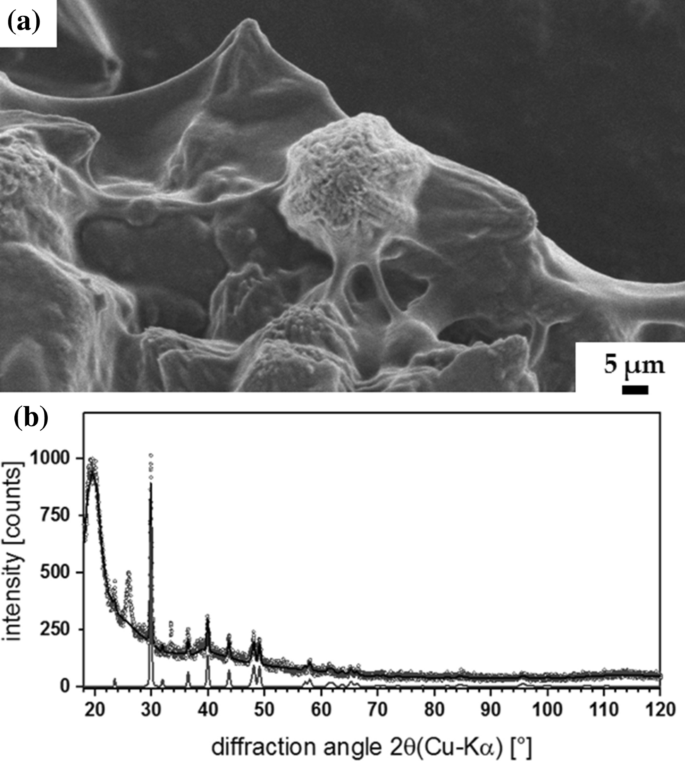 Electrochemical method for isolation of chitinous 3D scaffolds ...