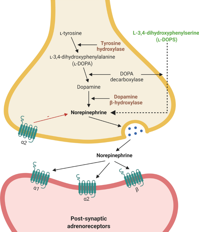 The mechanistic link between selective vulnerability of the locus ...