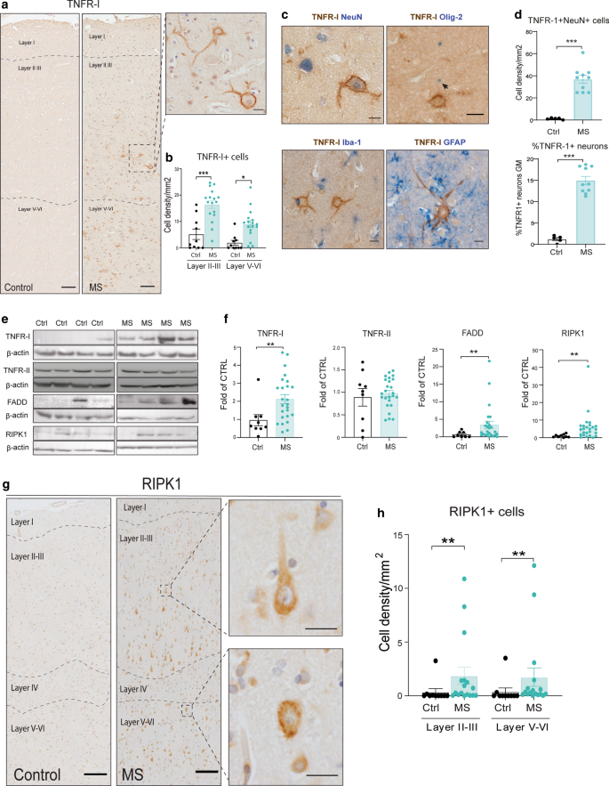Neuron-specific activation of necroptosis signaling in multiple ...