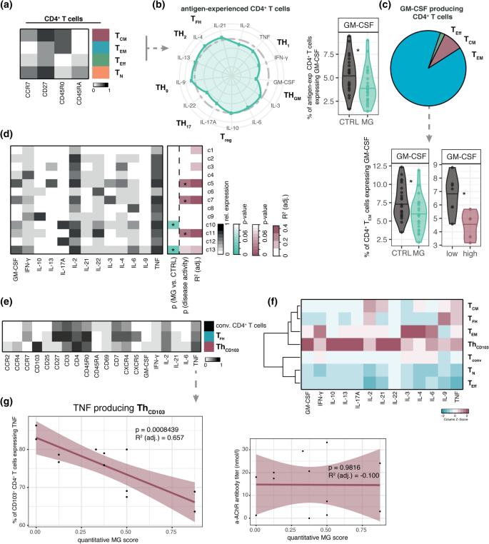 Single-cell profiling of myasthenia gravis identifies a pathogenic ...