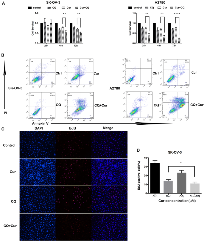 Curcumin Induces Apoptotic Cell Death And Protective Autophagy By Inhibiting Akt Mtor P70s6k Pathway In Human Ovarian Cancer Cells Springerlink
