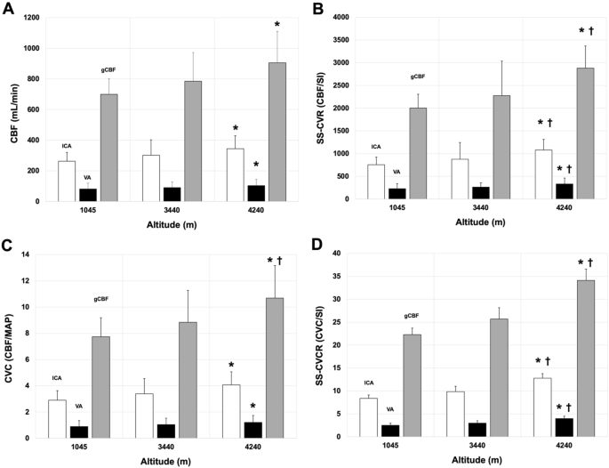 Steady-state cerebral blood flow regulation at altitude ...