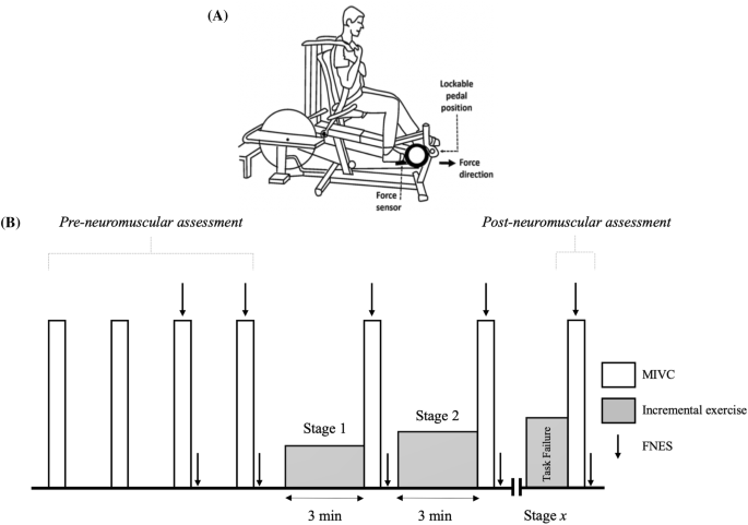 Neuromuscular function and fatigability in people diagnosed with ...