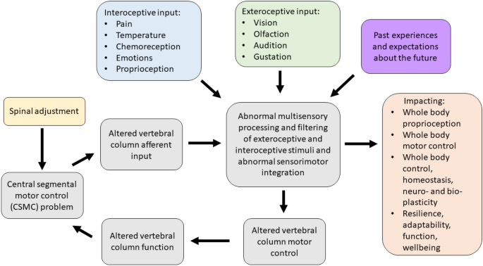 The contemporary model of vertebral column joint dysfunction and ...