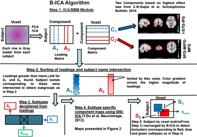 Source-based morphometry: a decade of covarying structural brain ...