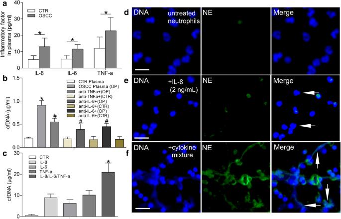 Neutrophil extracellular traps enhance procoagulant activity in ...