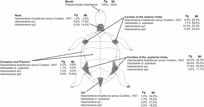 Spatio-temporal variation and the use of host body surface by ...