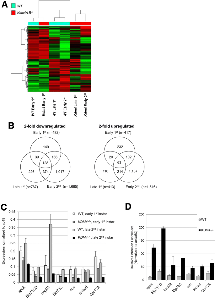 Genome-wide Kdm4 histone demethylase transcriptional regulation in ...