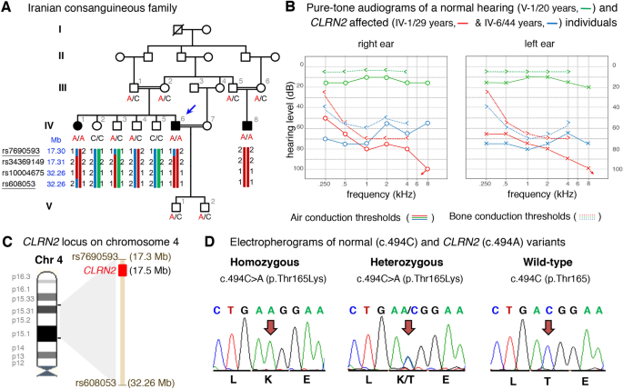 A biallelic variant in CLRN2 causes non-syndromic hearing loss in ...