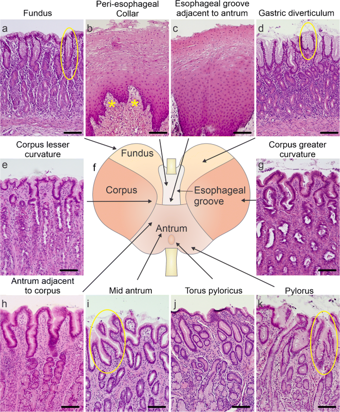 Distribution and co-expression patterns of specific cell markers ...