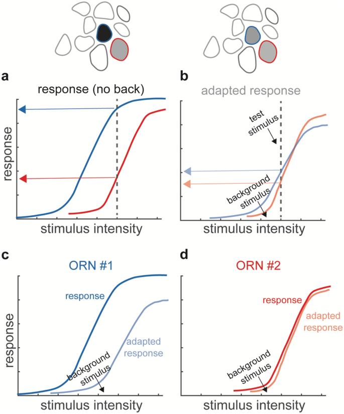 Adaptive Temporal Processing Of Odor Stimuli | SpringerLink