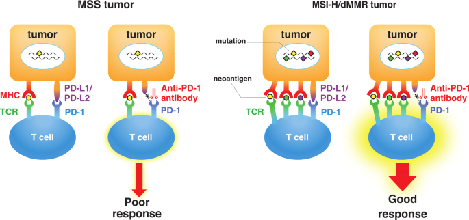 Microsatellite Instability And Immune Checkpoint Inhibitors Toward Precision Medicine Against Gastrointestinal And Hepatobiliary Cancers Springerlink
