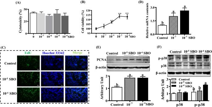 Sea Buckthorn Hippophae Rhamnoides L Oil Enhances Proliferation Adipocytes Differentiation And Insulin Sensitivity In 3t3 L1 Cells Springerlink