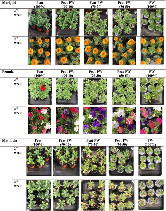 Utilization Of Paper Waste As Growing Media For Potted Ornamental Plants Springerlink