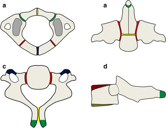 Imaging Of Pediatric Cervical Spine Trauma Springerlink Manubriosternal synchondrosis ( sternal synchondroses). imaging of pediatric cervical spine