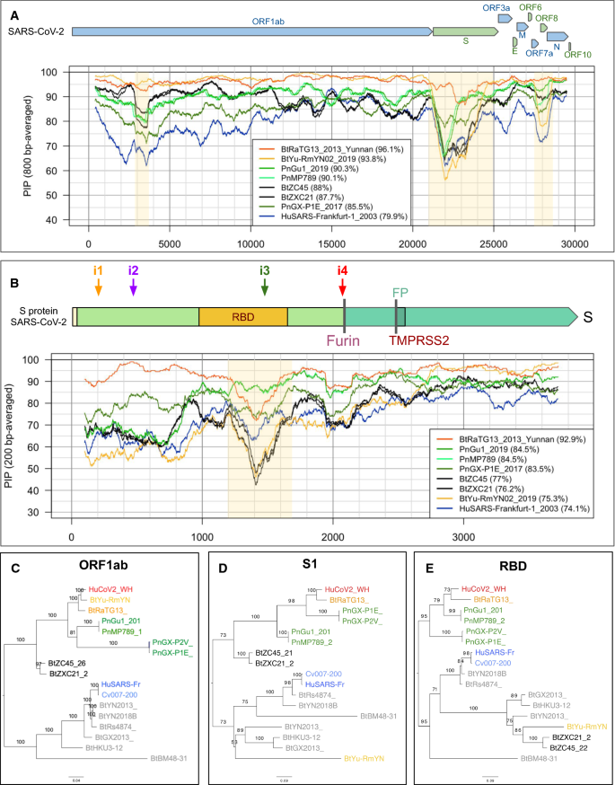 Tracing the origins of SARS-COV-2 in coronavirus phylogenies: a ...