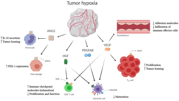 Cancer colon treatment Cancer colon immunotherapy