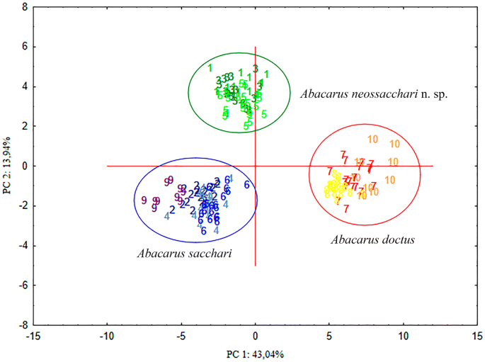Integrative taxonomy of Abacarus mites (Eriophyidae) associated ...