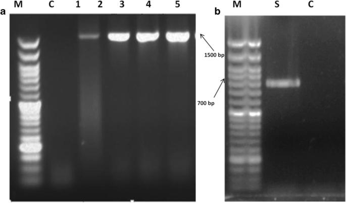 Isolation and characterization of heterotrophic nitrification ...
