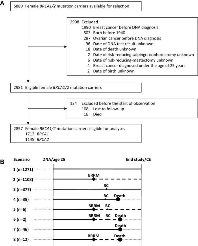 Survival After Bilateral Risk Reducing Mastectomy In Healthy Brca1 And Brca2 Mutation Carriers Springerlink
