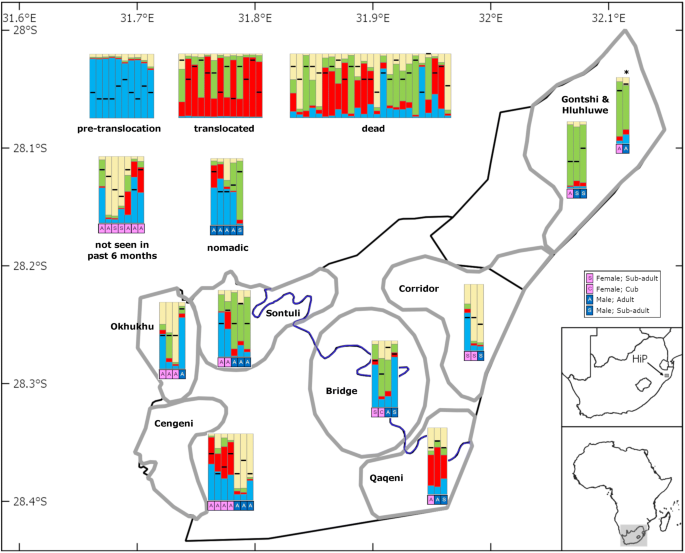 Genetic Rescue Of An Isolated African Lion Population Springerlink