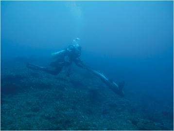 Tonic immobility in the zebra shark, Stegostoma fasciatum, and its ...