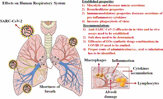 Covid 19 And Therapy With Essential Oils Having Antiviral Anti Inflammatory And Immunomodulatory Properties Springerlink