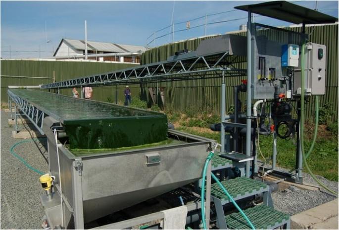 The chlorococcalean alga Chlorella in animal nutrition: a review ...