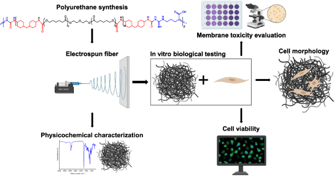 Biocompatibility studies of polyurethane electrospun membranes ...