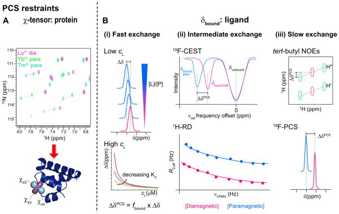 Paramagnetic NMR in drug discovery | SpringerLink
