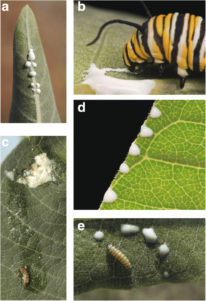 Plant Defense by Latex: Ecological