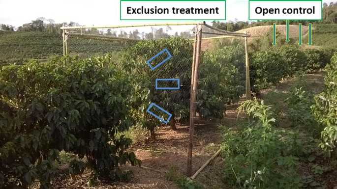 Effects of bird and bat exclusion on coffee pest control at ...