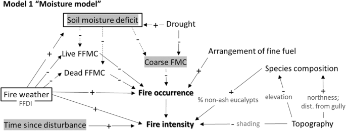 Exploring the key drivers of forest flammability in wet eucalypt ...