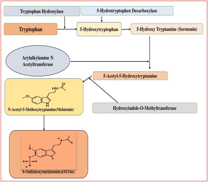 Melatonin And Its Ubiquitous Anticancer Effects Springerlink