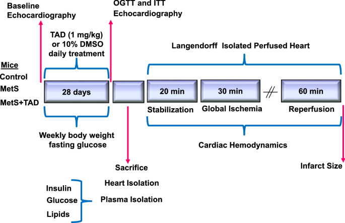 Chronic Inhibition Of Phosphodiesterase 5 With Tadalafil Affords Cardioprotection In A Mouse Model Of Metabolic Syndrome Role Of Nitric Oxide Springerlink