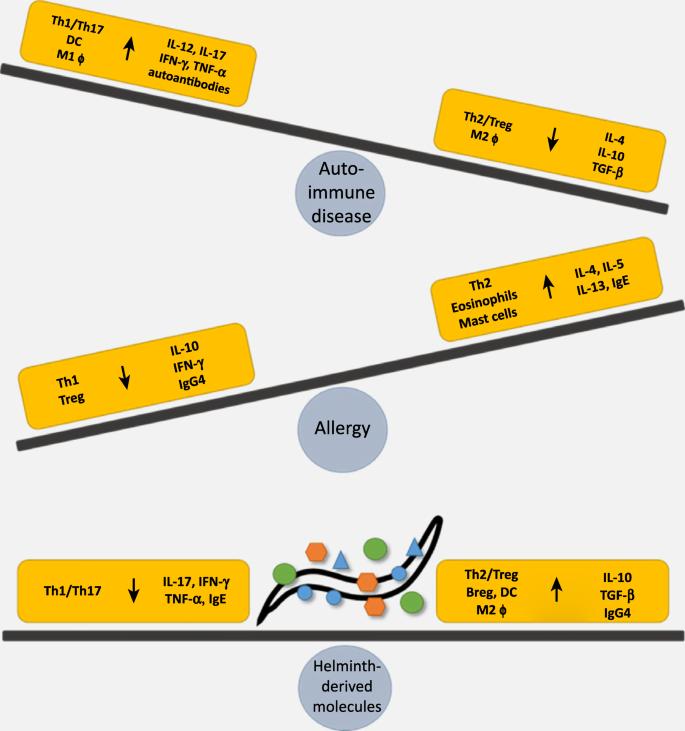 autoimmune disease helminth therapy