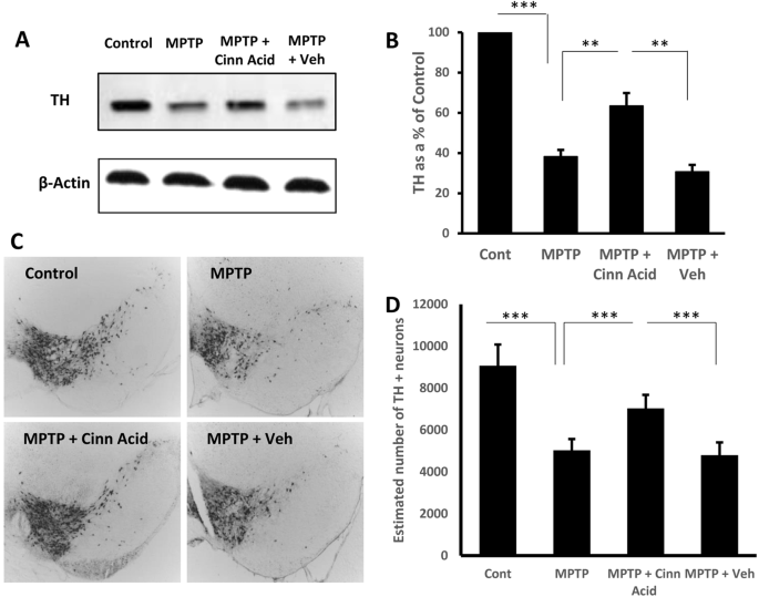 Cinnamic Acid Protects the Nigrostriatum in a Mouse Model of ...