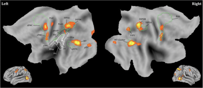 To Watch is to Work: a Review of NeuroImaging Data on Tool Use ...