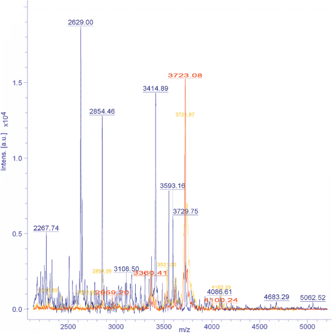 Survival of the Halophilic Archaeon Halovarius luteus after ...