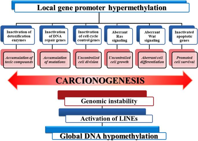 Phytochemicals In Cancer Prevention Modulating Epigenetic Alterations Of Dna Methylation Springerlink