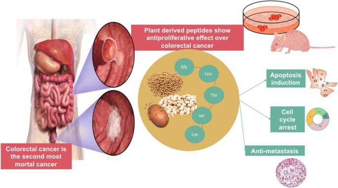 Peptides In Colorectal Cancer Current State Of Knowledge Springerlink