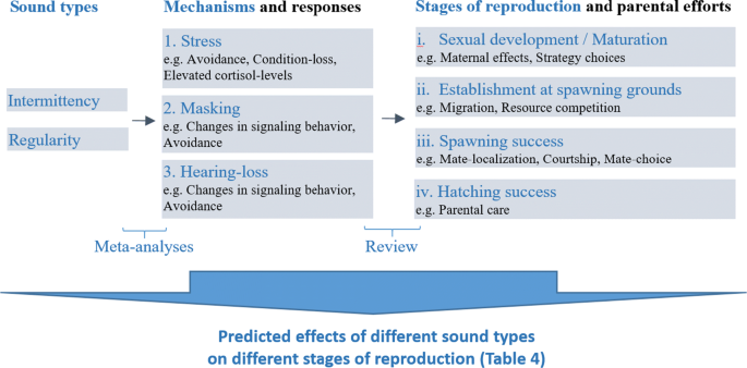 Predicting the effects of anthropogenic noise on fish reproduction ...