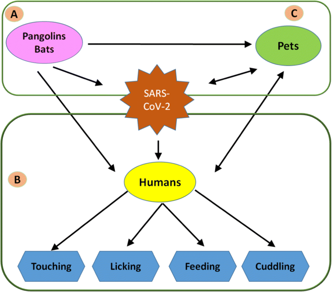 Human Animal Interface Of Sars Cov 2 Covid 19 Transmission A Critical Appraisal Of Scientific Evidence Springerlink